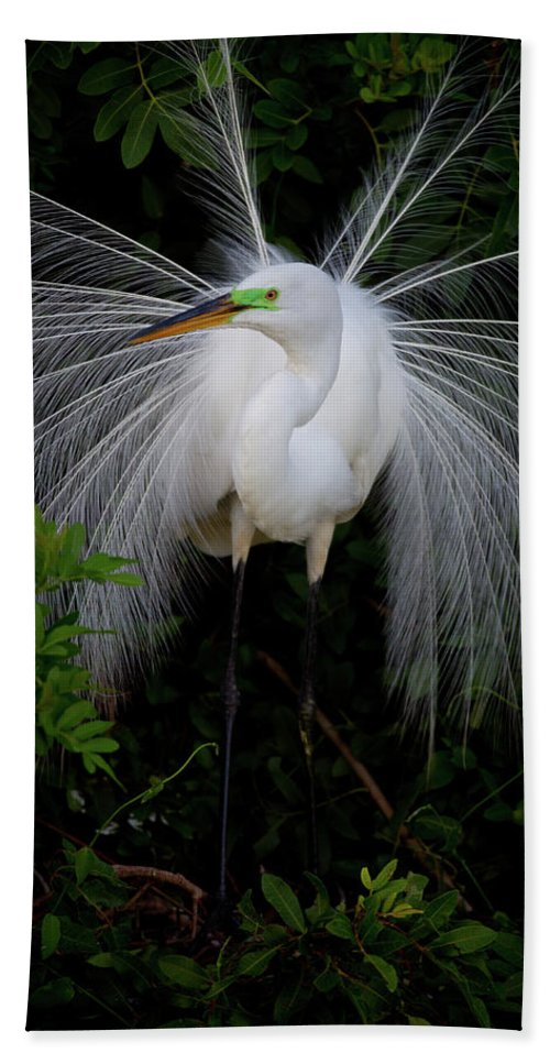 Great Egret Beach Towel featuring the photograph Great Egret by Dennis Goodman