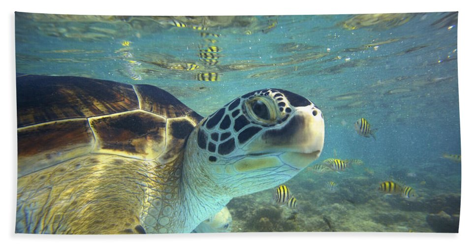 00451417 Beach Towel featuring the photograph Green Sea Turtle Balicasag Island by Tim Fitzharris