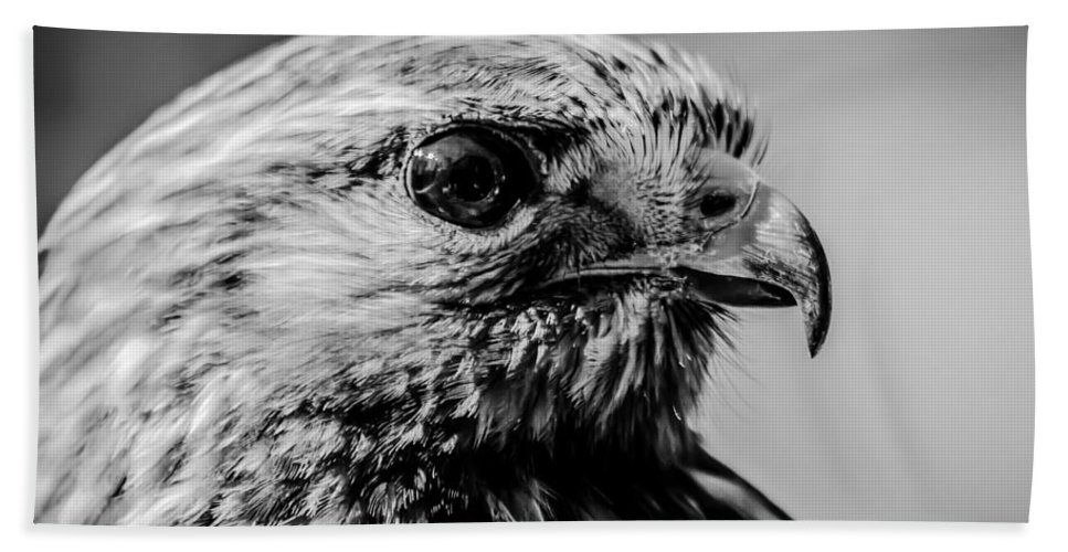 Hawk Beach Towel featuring the photograph Harris Hawk  by Alex Grichenko