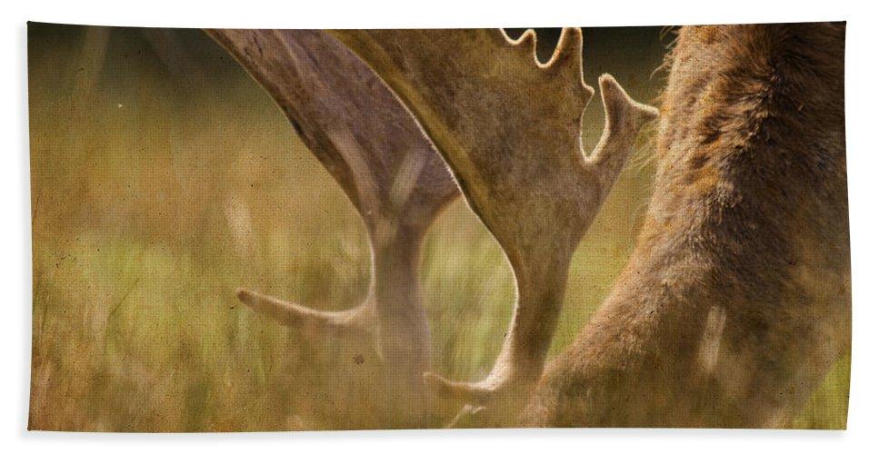 Fallow Deer Beach Towel featuring the photograph Having A Lunch by Angel Tarantella