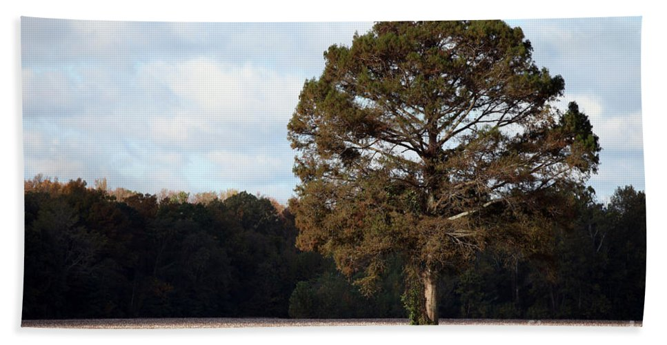 Trees Beach Towel featuring the photograph Home by Amanda Barcon