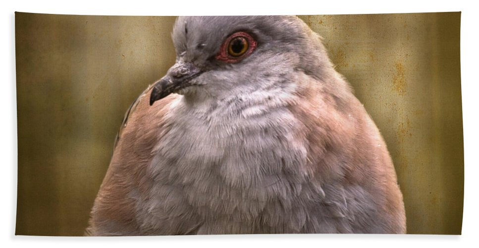 Bird Beach Towel featuring the photograph In The Captivity by Angel Ciesniarska
