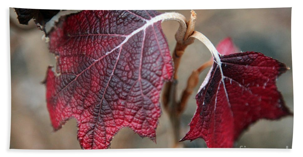 Fall Beach Sheet featuring the photograph Leaves by Amanda Barcon