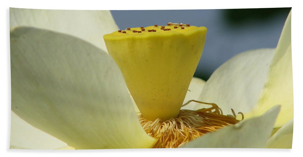 Lotus Beach Sheet featuring the photograph Lotus by Amanda Barcon