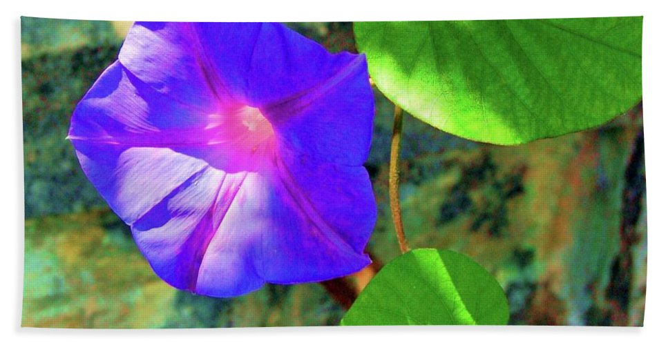 Morning Glory Beach Towel featuring the photograph Morning Glory by Debbi Granruth
