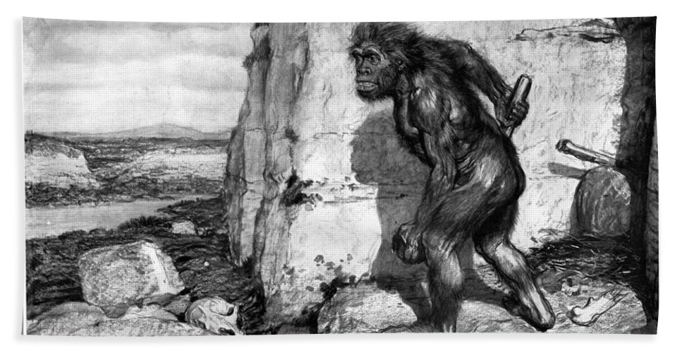 1909 Beach Towel featuring the photograph Neanderthal Man by Granger