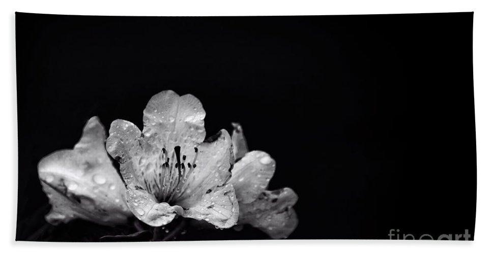 Kremsdorf Beach Towel featuring the photograph Nocturnal Blossom by Evelina Kremsdorf