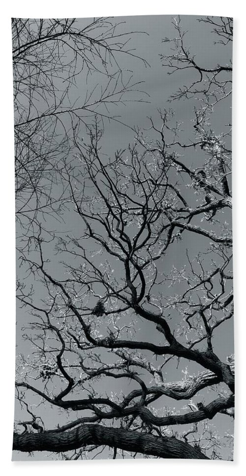 Trees Beach Towel featuring the photograph oak by Julian Grant