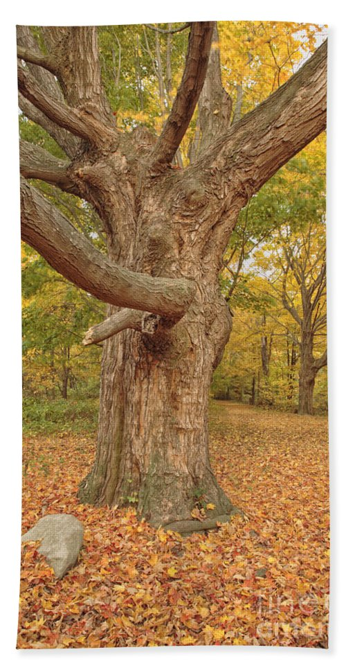 Fall Beach Towel featuring the photograph Odiorne Point State Park - Rye New Hampshire by Erin Paul Donovan