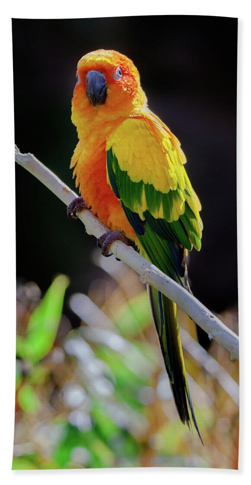 Parrot Beach Towel featuring the photograph Parrot by Hristo Shanov