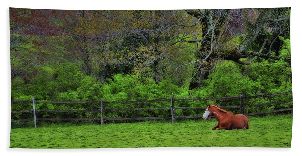 Horse Beach Sheet featuring the photograph Pasture Napping by JAMART Photography