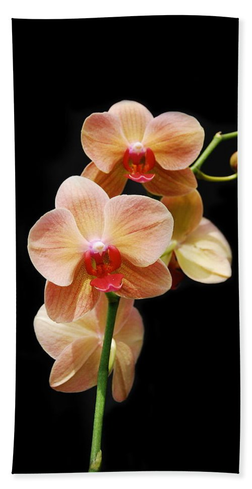 Orchids Beach Towel featuring the photograph Peach Orchids by Michael Peychich