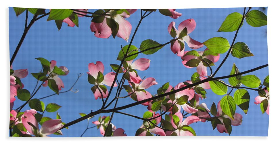 Tree Beach Towel featuring the photograph Pink Dogwood by Sarah Gage