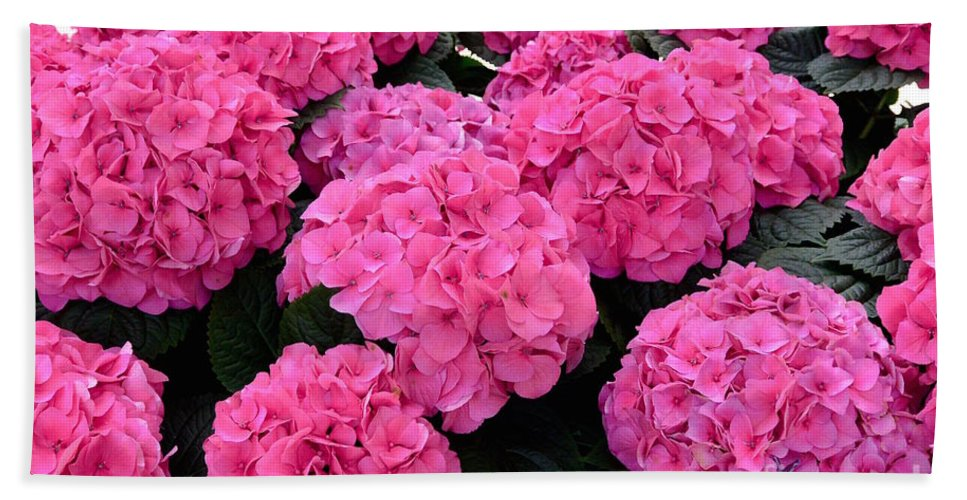 Bloom Beach Towel featuring the photograph Pink Hydrangeas by Jeannie Rhode