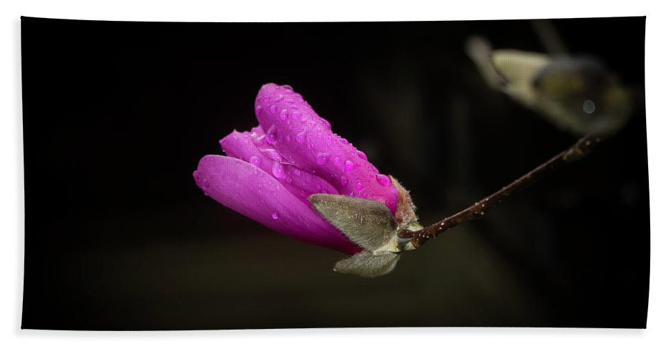 Flowers Beach Towel featuring the photograph Pink by Steve Purifoy