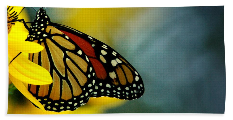 Queen Beach Towel featuring the photograph Queen Monarch by David Weeks