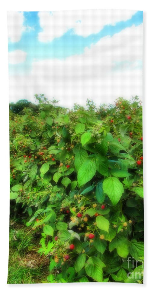 Raspberries Beach Towel featuring the photograph Raspberry Fields 2 by September Stone