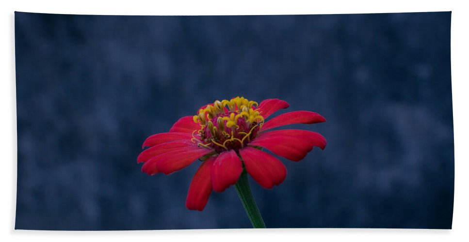 Orange Beach Towel featuring the photograph Red Flower 2 by Totto Ponce
