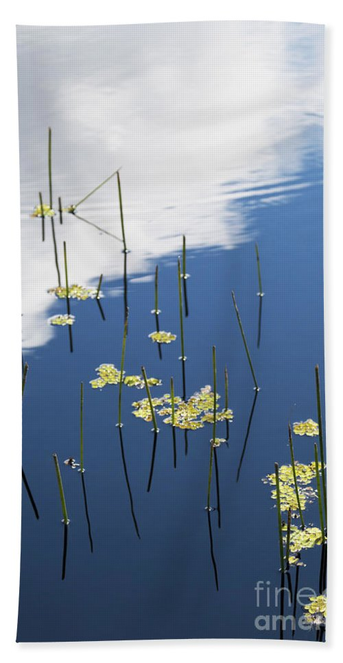 Nature Beach Towel featuring the photograph Reflections by Margie Hurwich