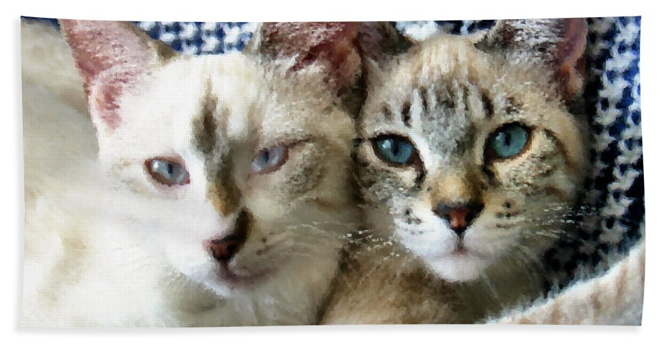 Cat Beach Towel featuring the photograph Rescued And Spoiled by Kristin Elmquist
