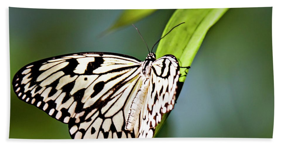 Butterfly Beach Towel featuring the photograph Rice Paper Butterfly 5 by Walter Herrit