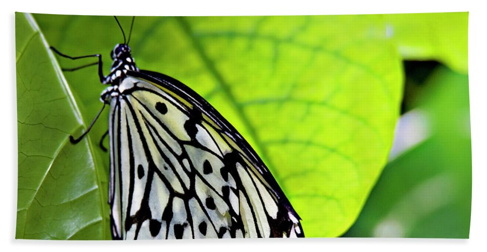 Butterfly Beach Towel featuring the photograph Rice Paper Butterfly 6 by Walter Herrit