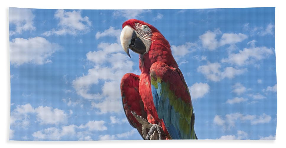 Macaw Beach Towel featuring the photograph Scarlet Macaw by Kim Hojnacki