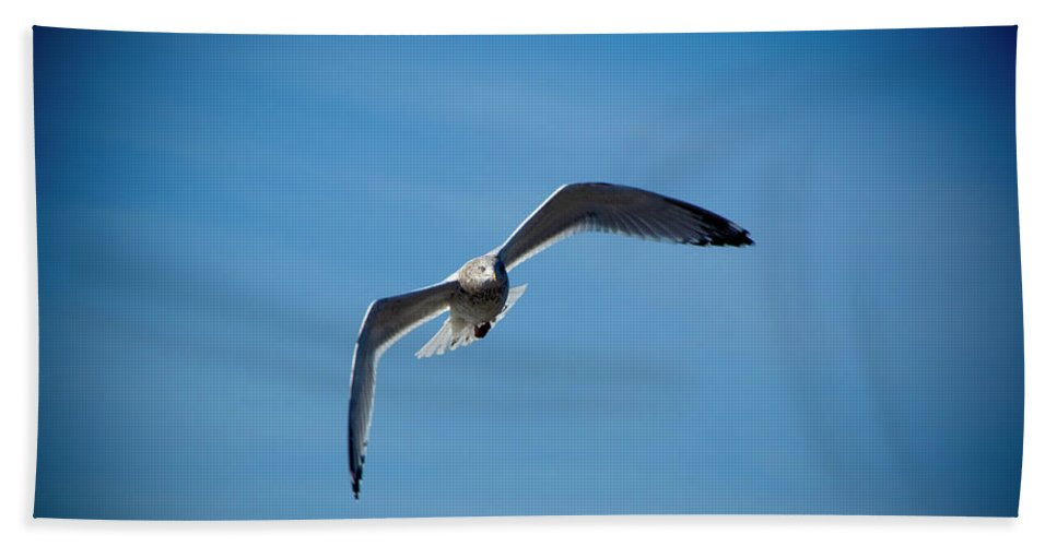 Seagull Beach Towel featuring the photograph Seagull In Flight by Steven Natanson