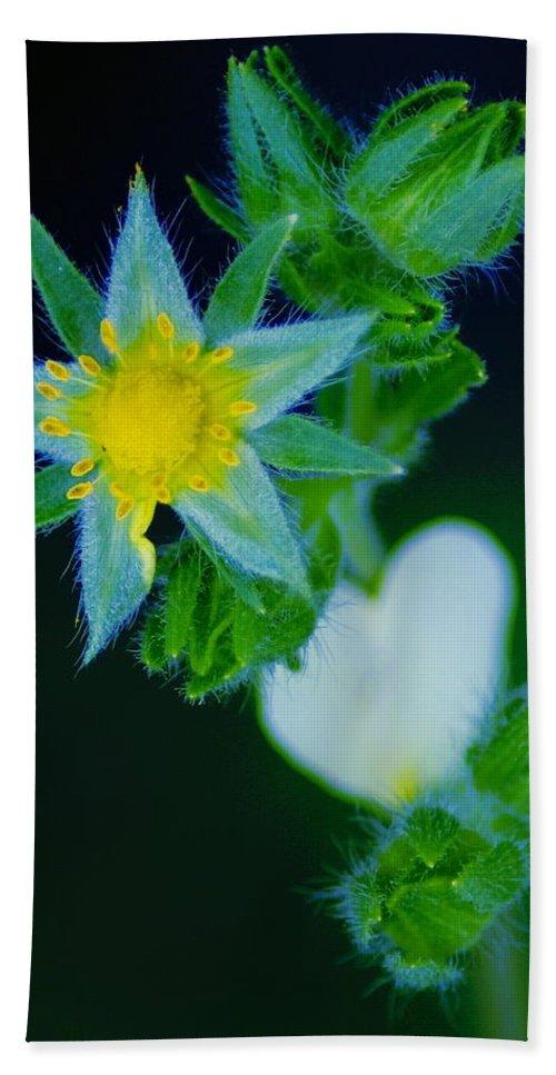 Flowers Beach Towel featuring the photograph Starflower by Ben Upham III
