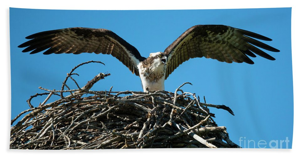 Osprey Beach Towel featuring the photograph Stay Away by Mike Dawson
