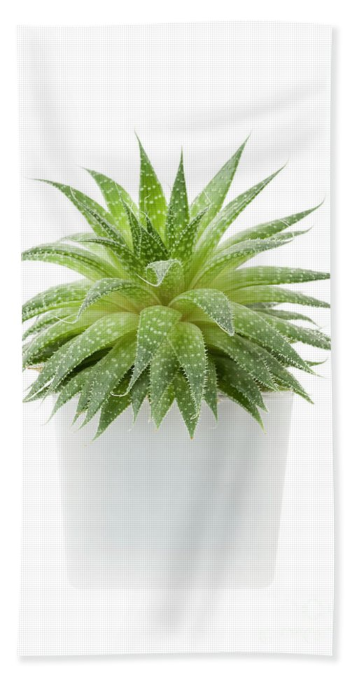 Succulent Beach Sheet featuring the photograph Succulent Plant 1 by Elena Elisseeva