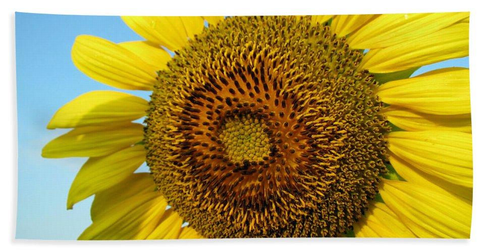 Sunflower Beach Sheet featuring the photograph Sunflower Series by Amanda Barcon