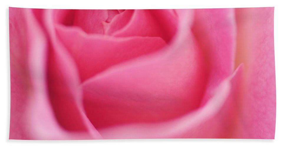 Beach Towel featuring the photograph Sweet Rosiness by The Art Of Marilyn Ridoutt-Greene