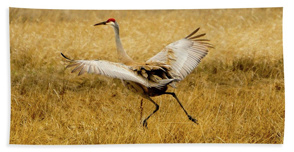 Sandhill Crane Beach Towel featuring the photograph Taking Flight by Greg Norrell