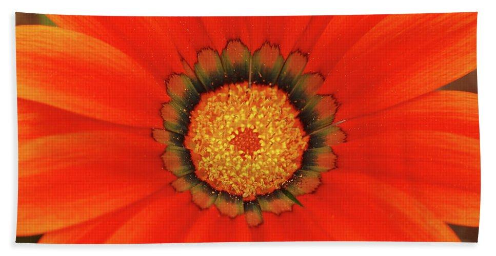 Daisy Beach Towel featuring the photograph The Beauty Of Orange by Lori Tambakis
