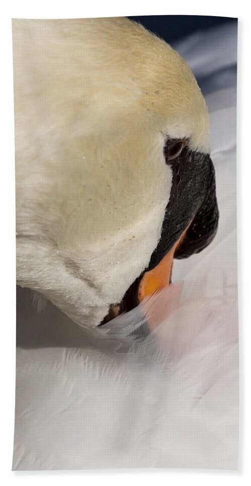 Swan Beach Towel featuring the photograph The Quiet Swan by David Pyatt