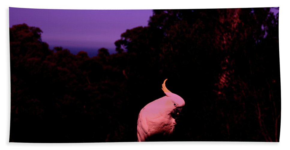 Twilight Beach Towel featuring the photograph Twilight by Douglas Barnard