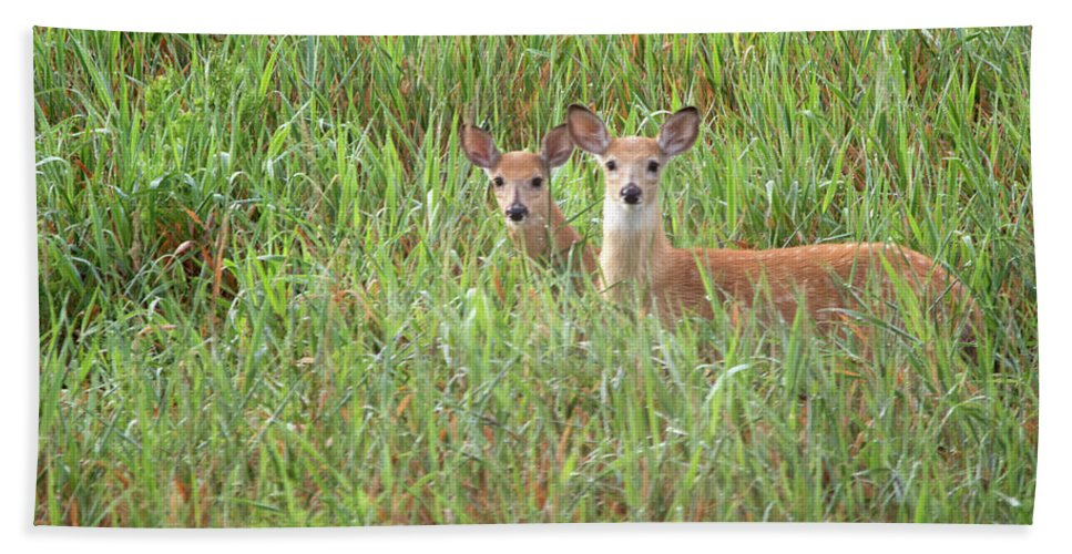 White Tail Deer Beach Towel featuring the photograph Two by Linda Kerkau