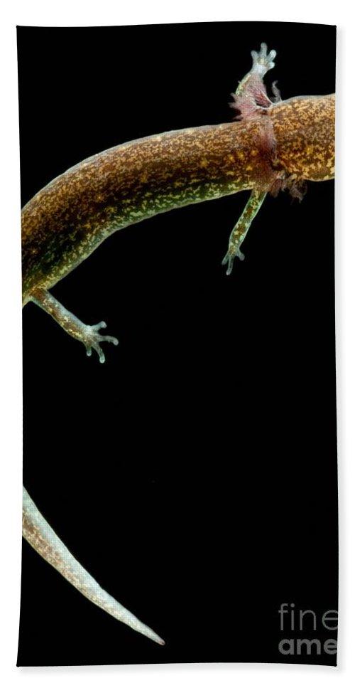 Valdina Farms Salamander Beach Towel featuring the photograph Valdina Farms Salamander by Dant� Fenolio