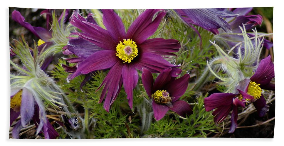 Flowers Beach Towel featuring the photograph Welcome To The Garden by Ben Upham III