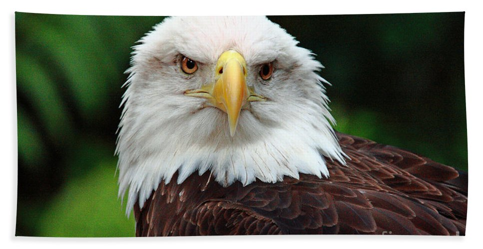 Bird Beach Towel featuring the photograph Where Eagles Dare by Randy Matthews