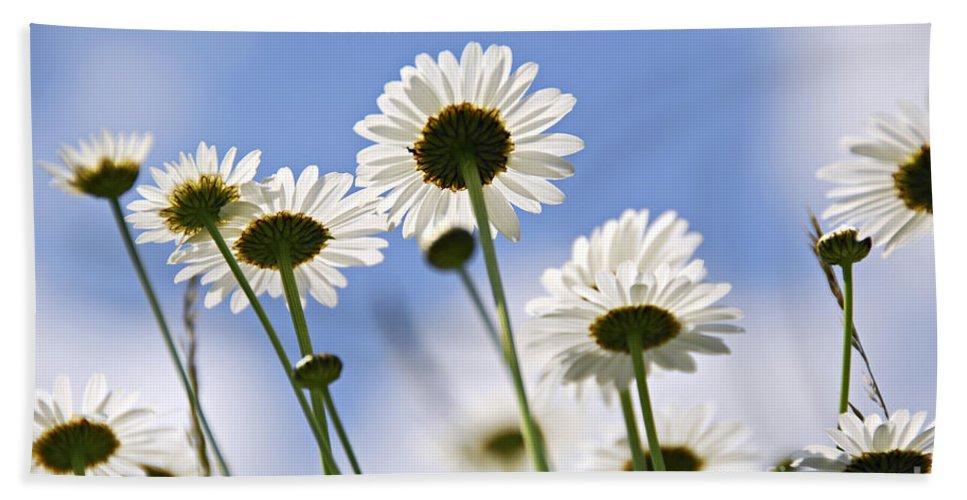 Daisy Beach Sheet featuring the photograph White Daisies by Elena Elisseeva