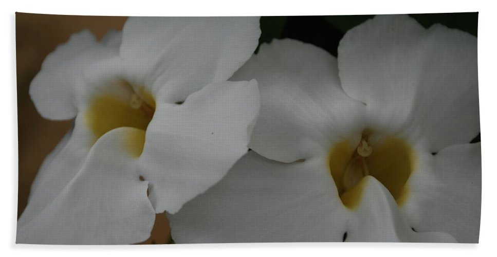 Macro Beach Sheet featuring the photograph White Orchids by Rob Hans