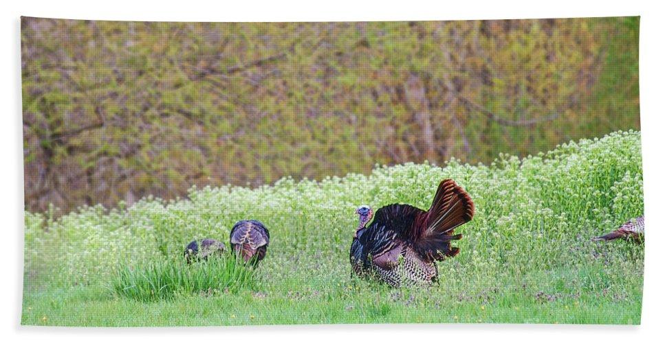 Turkey Beach Towel featuring the photograph Wild Turkey by David Arment