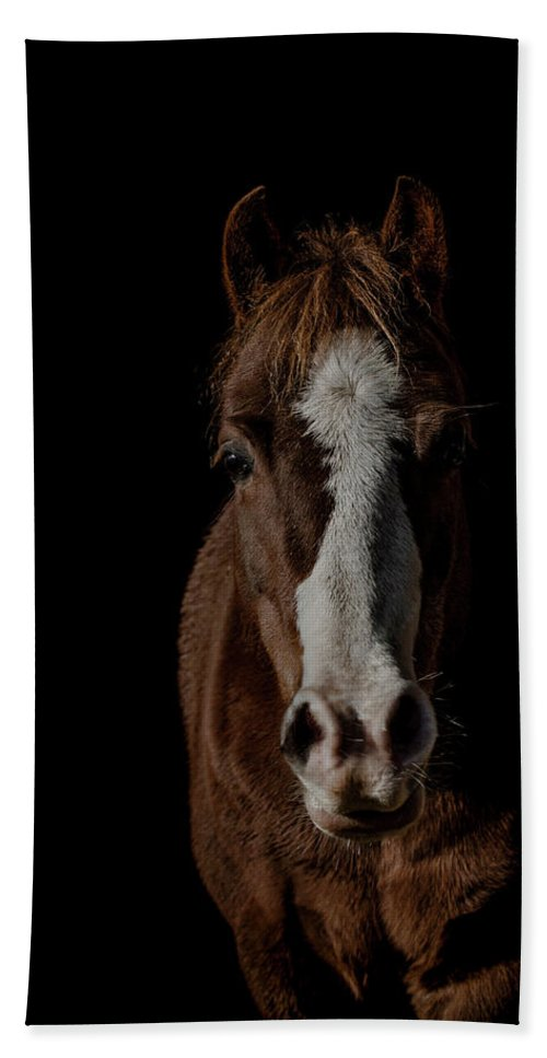 Pony Beach Towel featuring the photograph Window To The Soul by Paul Neville