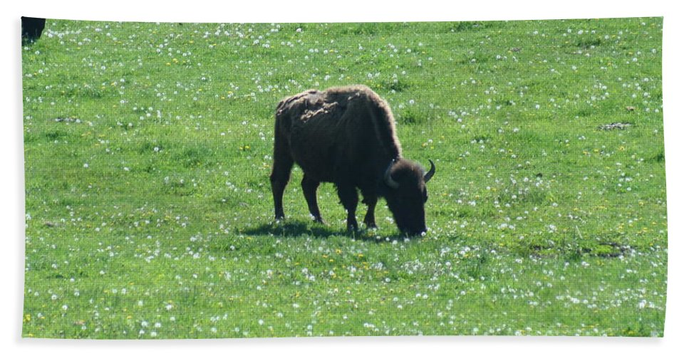 Wisconsin Beach Towel featuring the photograph Wisconsin Buffalo by Tommy Anderson