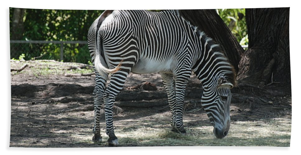 Animal Beach Towel featuring the photograph Zebra by Rob Hans