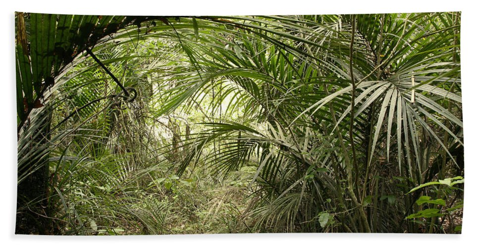 Rain Forest Beach Towel featuring the photograph Jungle 60 by Les Cunliffe
