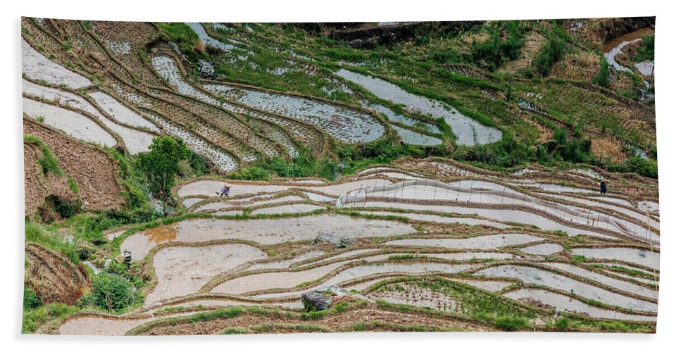 Terrace Beach Towel featuring the photograph Longji Terraced Fields Scenery by Carl Ning