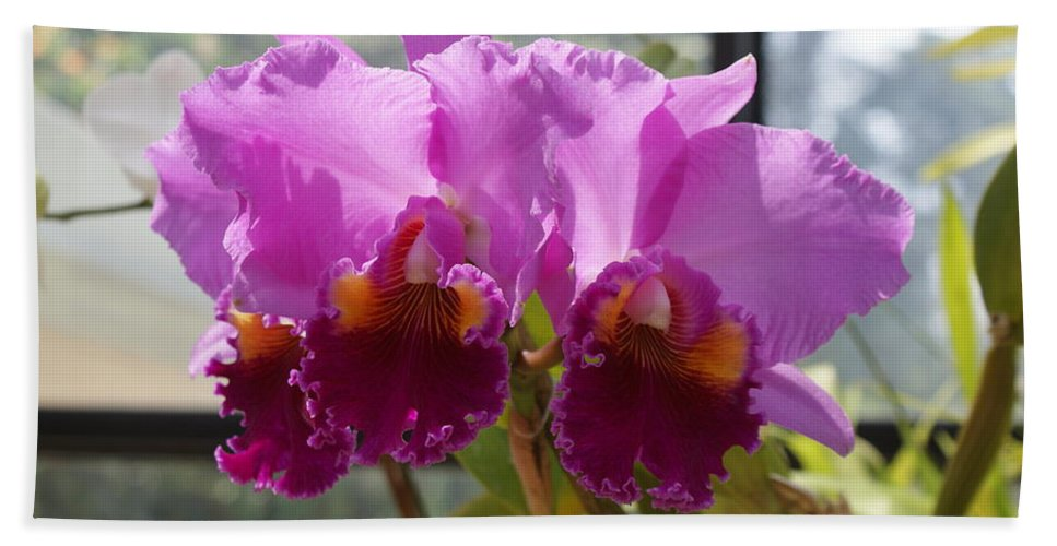 Orchids Beach Towel featuring the photograph Orchids by Jegan G Raja